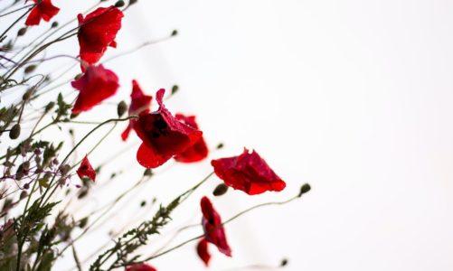 Coraz częściej wysyłamy kwiaty za pośrednictwem kwiaciarni internetowych