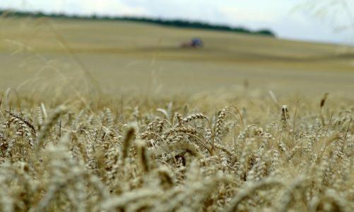 Belarus MTZ – wszystko o ciągnikach rolniczych tej marki