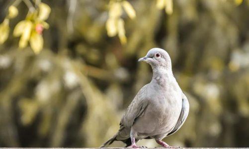 Siatka przeciw gołębiom