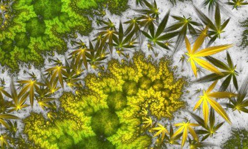 Sprzęt do hodowli marihuany od A do Z