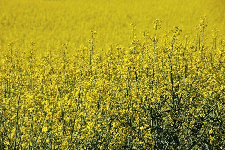 Aktualne informacje ze świata rolnictwa i porady dla rolników w Internecie